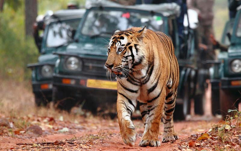 Jaipur with same day trip Ranthambhore National Park